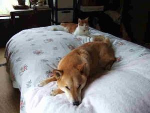 母のベッドを占領中のゴンともも