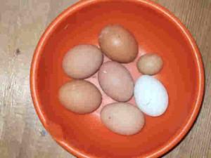 誰かがこんなに小さな卵を産みました