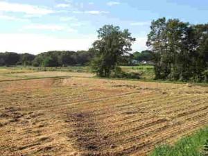 収穫が終わった田んぼ