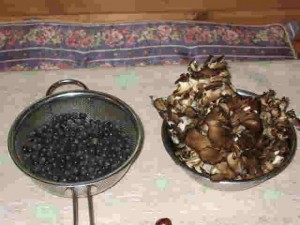 最後のブルーベリーと初収穫の舞茸