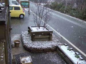 今日は夕方から本格的な雪