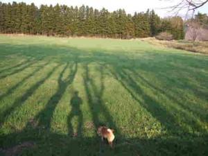 牧草地の緑が濃くなってきました