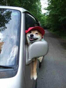 ドライブをする時はいつもこんなスタイルのゴンです
