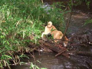 ボールを川の流れに落とし、それを拾ってまた落とす一人遊びをするゴン
