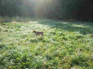 朝の草原での散歩