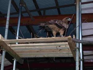 ピーコの産卵場として、倉庫天井から単管パイプを吊り下げ棚を作りました