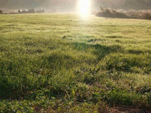 同じく、ご近所の草原の朝