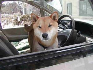 車からおりたい!!